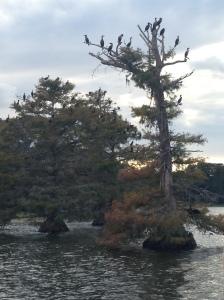 2014-11-09 WP Boat Ride 11