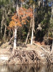 2014-11-15 Suwannee Canoe Trip 21