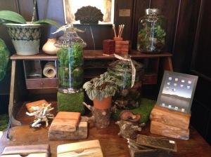 2015-07-04 Liepers Fork Shop Moss Terrarium 2