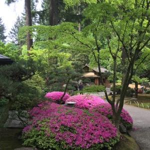 2016-05-03 Portland - Washington Park Japanese Gardens 1