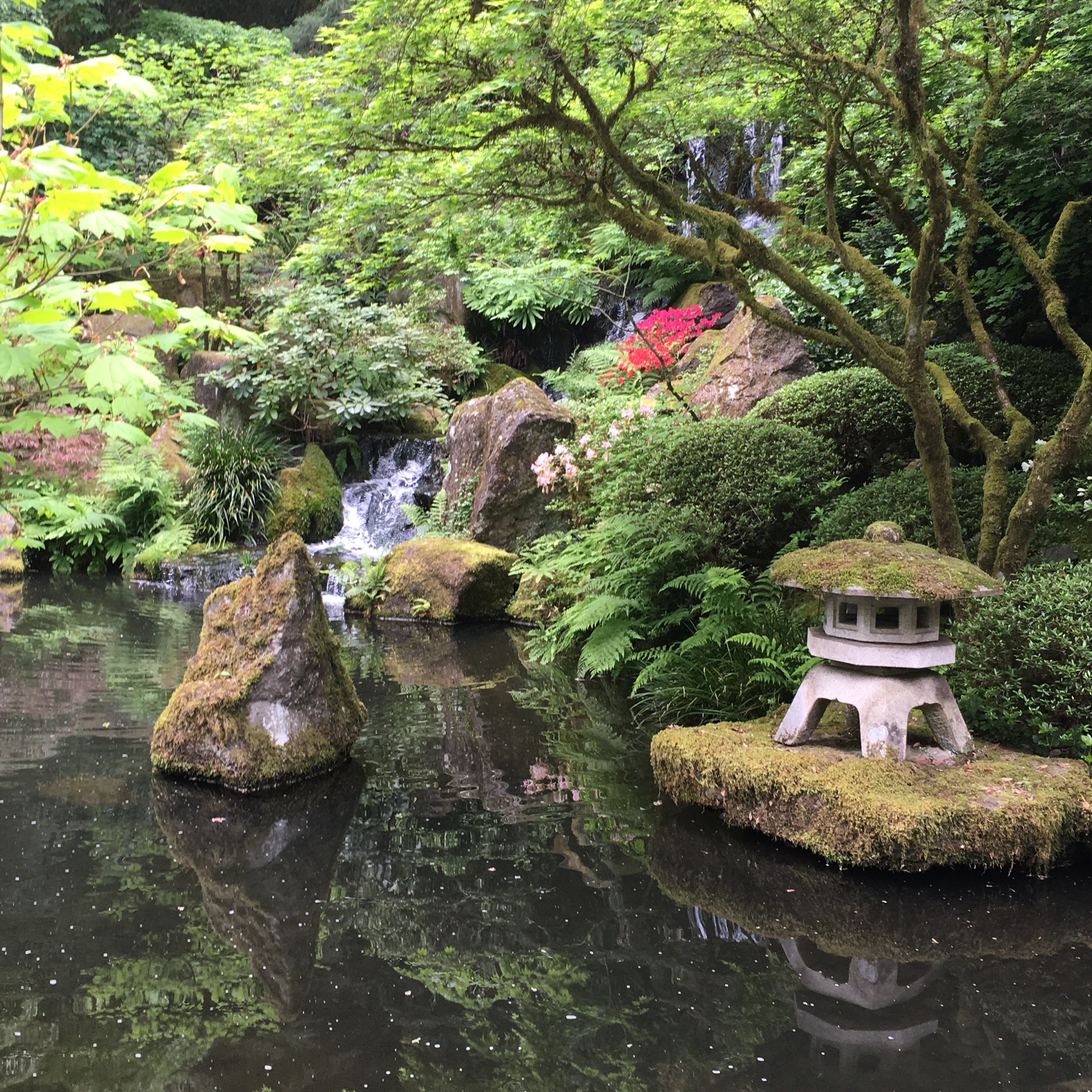 Japanese Garden: Seattle With A Side Of Poison Oak