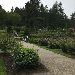 2016-05-03 Portland - Washington Park Rose Garden 2