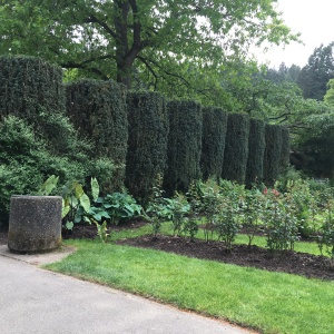 2016-05-03 Portland - Washington Park Rose Garden 3