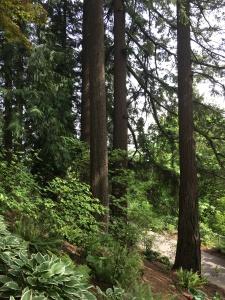 2016-05-03 Portland - Washington Park trail 1