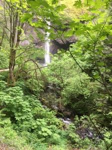 2016-05-04 Portland - Columbia River Latourell Falls 8