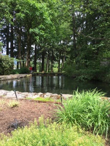2016-05-04 Portland - Columbia River Salmon Hatchery and Dam 7