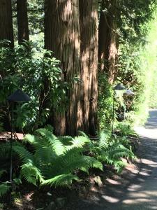 2016-05-06 Victoria BC - Buchart Gardens 18
