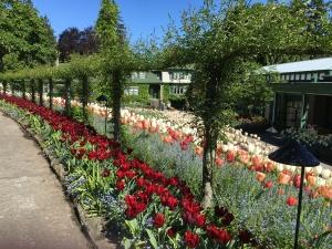 2016-05-06 Victoria BC - Buchart Gardens 2