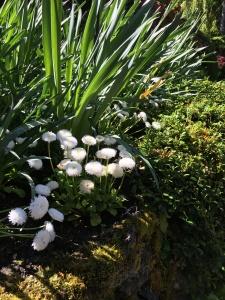 2016-05-06 Victoria BC - Buchart Gardens 35