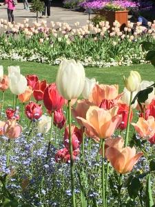 2016-05-06 Victoria BC - Buchart Gardens 5
