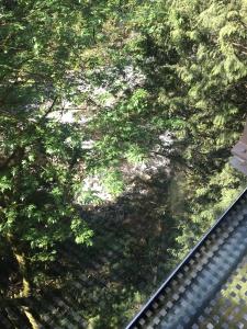 2016-05-07 Vancouver - Capillino Suspension Bridge 17