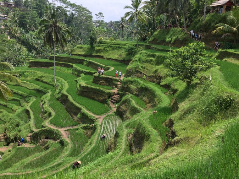 2017-03-23 Bali Rice Terrace 17