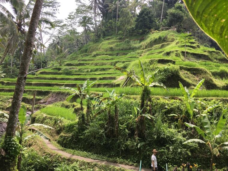 2017-03-23 Bali Rice Terrace 2