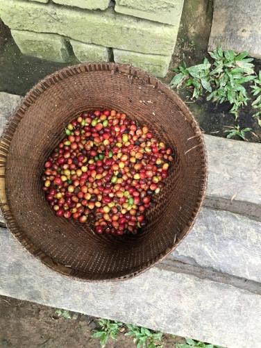 2017-03-23 Bali Ubud Coffee Plantation 4