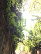 2017-03-25 Bali Ubud road to our villa 15
