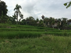 2017-03-25 Bali Ubud road to our villa 8