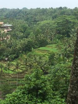 2017-03-26 Bali Ubud Sayan Brunch 7