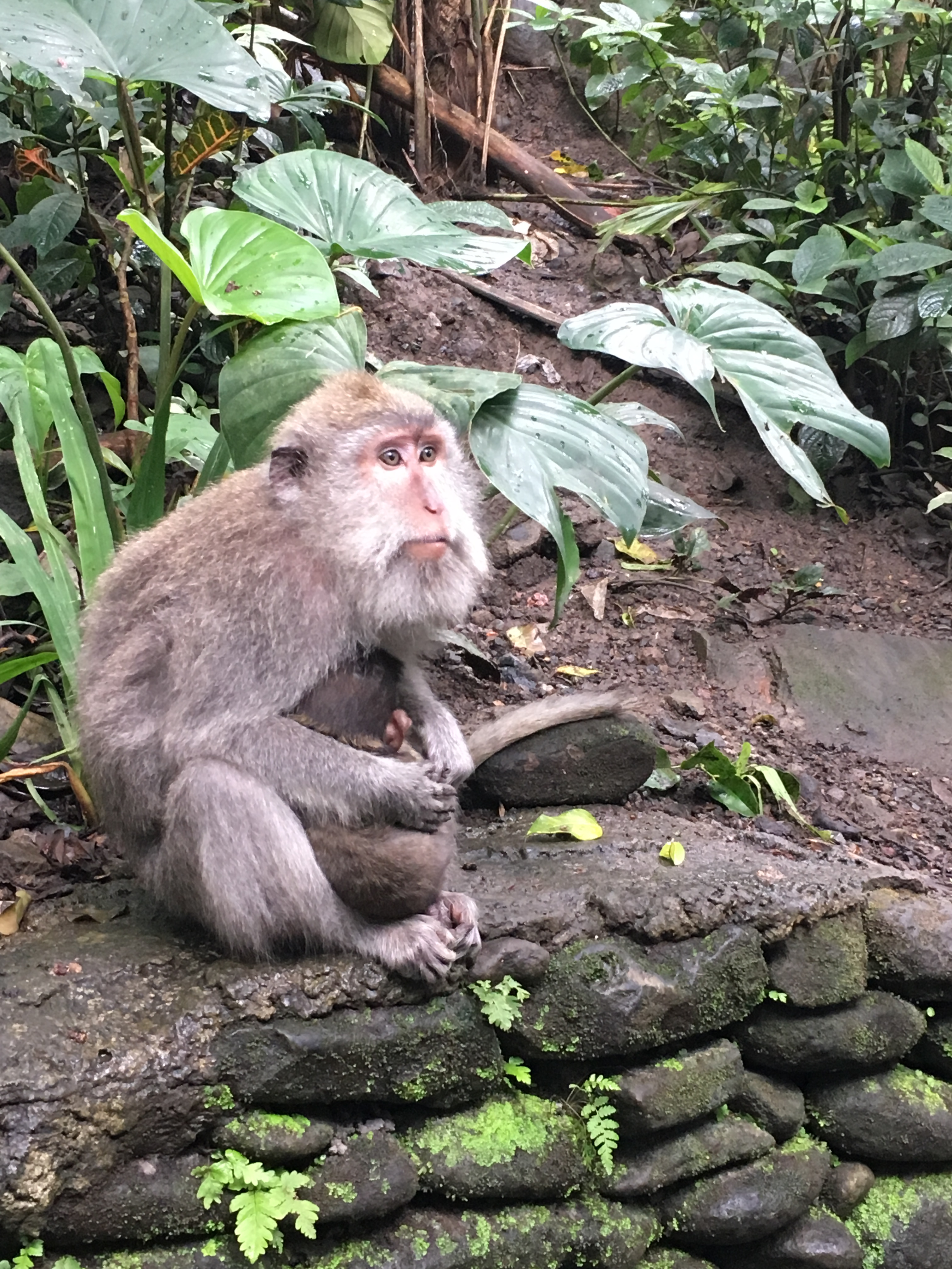 2017-03-27 Bali Ubud Monkey Forest 2.jpg